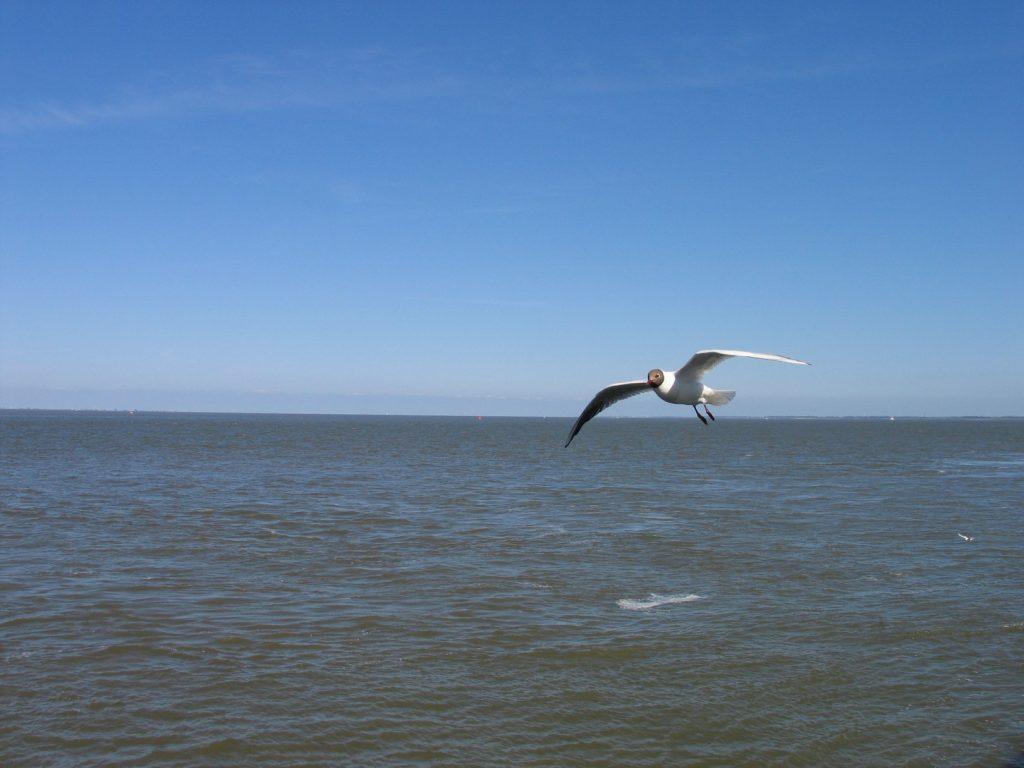 Moewe Nordsee Cuxhaven